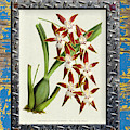 Orchid Framed On Weathered Plank And Rusty Metal by Baptiste Posters