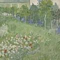 Daubignys Garden  by Vincent van Gogh