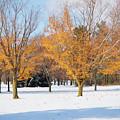 A Blend Of Seasons by Kim Hojnacki