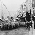 A Car Surrounded By Sheep, Lewes High by Heritage Images