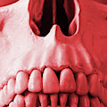 A Close Up Of A Human Skull In Red by Derrick Neill
