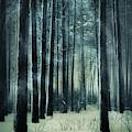 A Dark Winter Night by Anne Leven