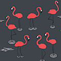A Flamboyance Of Flamingos  by Mark Rogan