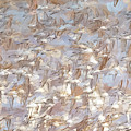 A Fling Of Sandpipers by Tracy Munson