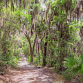 A Forest Trail by John M Bailey