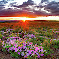A High Desert Spring by Leland D Howard