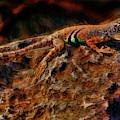 A Lizard's Life by Blake Richards