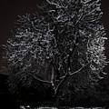 A Lonely Bench by Jaroslaw Blaminsky