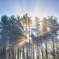 A New Day Dawns by Tim Gainey