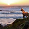 A Palomino Sunset by Melinda Hughes-Berland