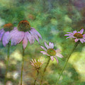 A Small Gathering  2872 Idp_2 by Steven Ward