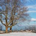 A Snowy Morning by Kim Hojnacki