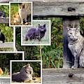 A Variety Of Cats by Linda Vanoudenhaegen