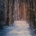 A Walk In Winter by Dan Sproul