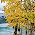 Abraham Lake by Minnetta Heidbrink