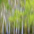 Abstract Forest In Motion Blur by James BO Insogna
