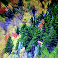 Abstract Forest Photography 5501d1 by Ricardos Creations