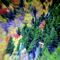 Abstract Forest Photography 5501d2 by Ricardos Creations