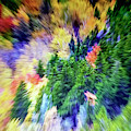 Abstract Forest Photography 5501f1 by Ricardos Creations