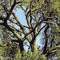 Abstract In The Oak Limbs by D Hackett