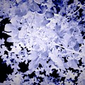 Blue Tree Abstract, Dark Botanical Landscape Art, Blue, With Black Background by Itsonlythemoon