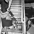 Actress Ava Gardner And Her Dog, Rags by New York Daily News Archive