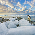 Adelie Penguins,  Holtedehl Bay by Eastcott Momatiuk