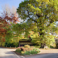 Adlestrop In The Autumn  by Tim Gainey