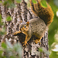 Adorable Intruder, Editor's Favorite, National Geographic Your Shot by Brian Tada
