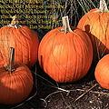 The Pumpkin Patch by Dora Sofia Caputo Photographic Design and Fine Art