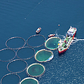 Aerial View Of Fish Farm by Gece33