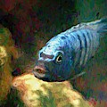 African Cichlid Blue Zebra Van Gogh by Don Northup