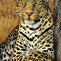 African Leopard Portrait Wildlife Rescue by Dave Welling