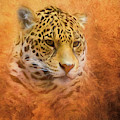 African Leopard by Steven Richardson
