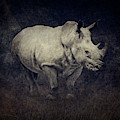 African White Rhinoceros by Sandra Selle Rodriguez