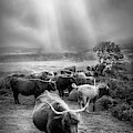 After The Rain On The Mountain In Black And White by Debra and Dave Vanderlaan