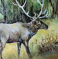 Alaska Elk by Linda Shackelford