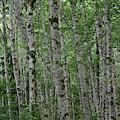 Alder Grove by Dylan Punke