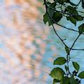 Alder Reflections by Robert Potts