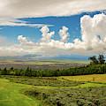 Alii Kula Lavender Farm by Jeff Phillippi