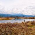Alouette River Pitt Meadows by Sharon Talson