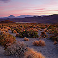 Altiplano Grasslands At Sunset Isluga National Park Chile by James Brunker