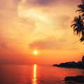 Amazing Colors Of Tropical Sunset by Perfect Lazybones