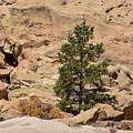 Amazing Life On The Sandstone Cliffs by Brenda Landdeck
