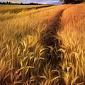 Amber Waves Of Grain Blowing In The Wind by Debra and Dave Vanderlaan