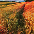 Amber Waves Of Grain Watercolors Painting  by Debra and Dave Vanderlaan