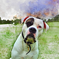American Bulldog by Marvin Blaine