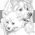 American Eskimo And Pup by Barbara Keith