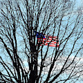 American Flag Branching Out At Fort Mchenry by Bill Swartwout Photography