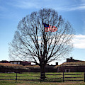 American Flag Tree At Fort Mchenry by Bill Swartwout Photography